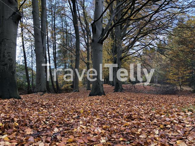 Autumn in a forest around Oudeschoot, Netherlands