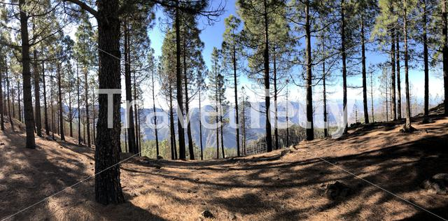 Forest panorama on Gran Canaria