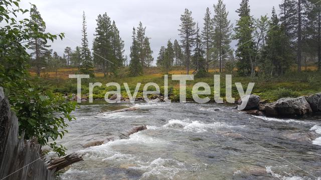 A river and pines landscape in Borgefjell National Park Norway