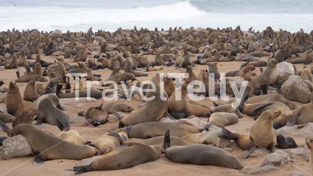 Sea lion colony at Cape Cross Seal Reserve in Namibia