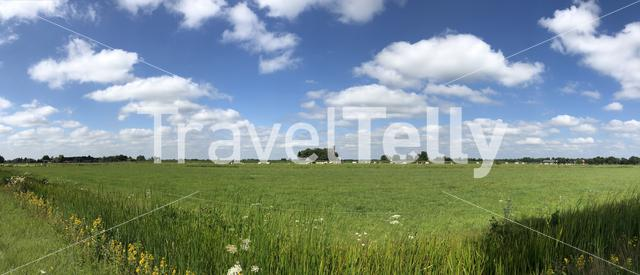 Panorama from cows and farmland near Gorredijk in Friesland The Netherlands