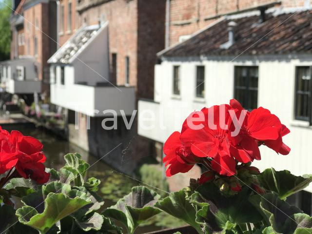 Red flowers in front of the hanging kitchens in Appingedam The Netherlands