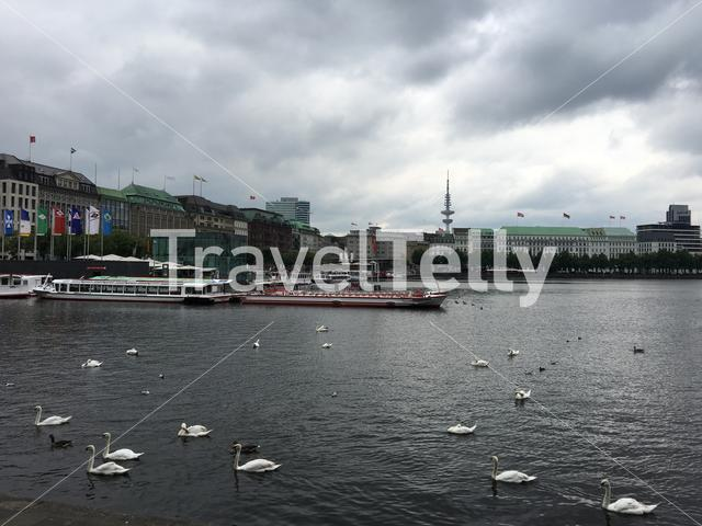 Binnenalster Lake with swans in Hamburg, Germany