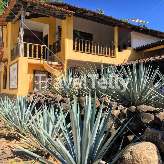 Blue agave plant in front of tequila factory Puerto Vallarta Mexico, Eyespiration travel blogger in South America.