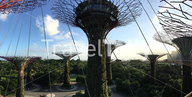 Panorama from the Supertree Grove at Gardens by the Bay in Singapore