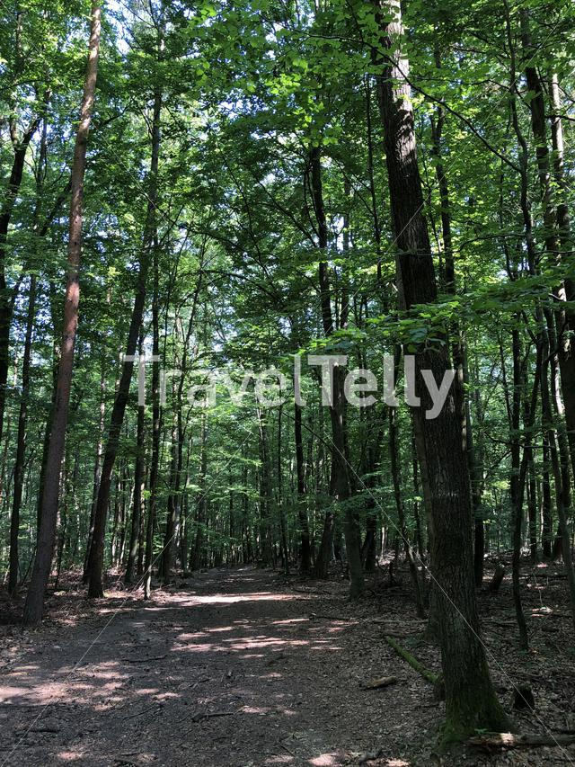 Forest around the Altenburg Castle in Bamberg Germany