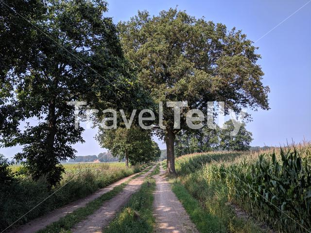 Dirt road around Stokkum, Overijssel The Netherlands