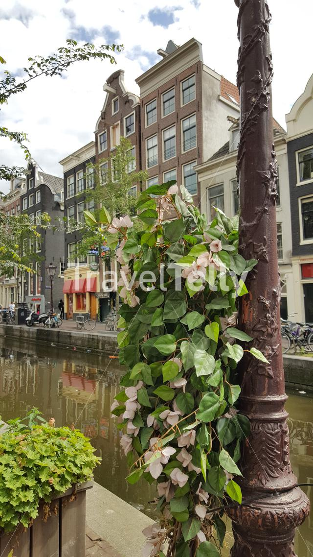 Flowers at the lamppost at Amsterdam canals in Red Light district