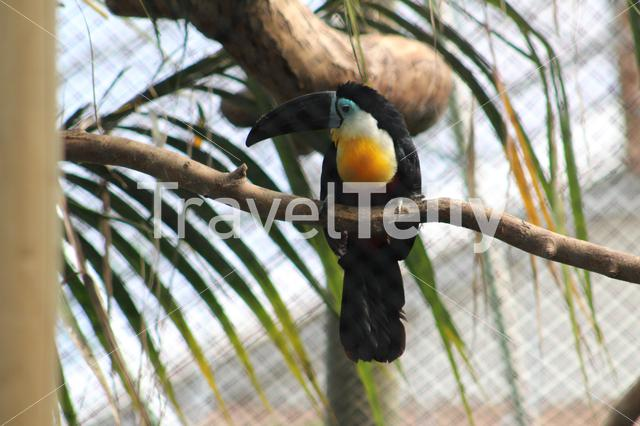 Toucan on a tree at the Zoo
