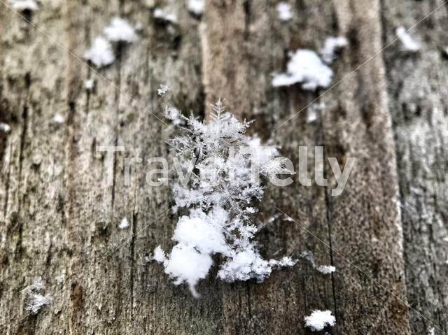 Snowflakes on a wooden plank