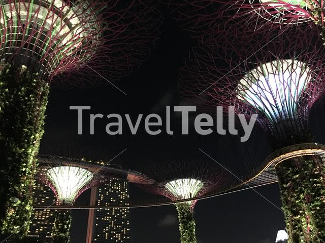 Supertree Grove skywalk with lights at Gardens by the Bay in Singapore