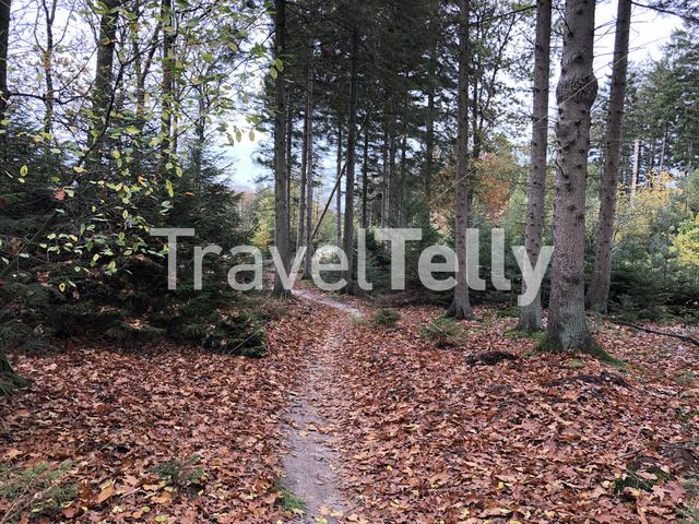 Forest during autumn at Nationaal Park Drents-Friese Wold in Friesland, The Netherlands