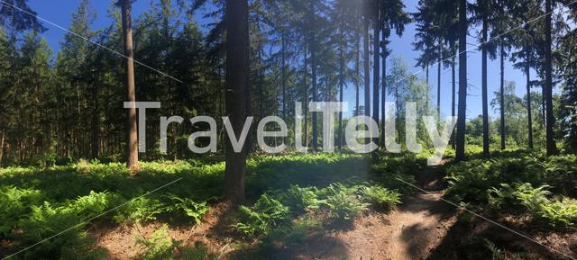 Panorama from a MTB path around Stegeren in Overijssel, The Netherlands