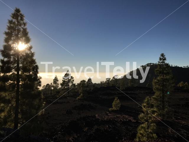 Sun and forest above the clouds at Teide National Park on Tenerife