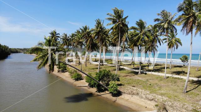 Tropical palmtrees at river and sea , San Vincente, Philippines