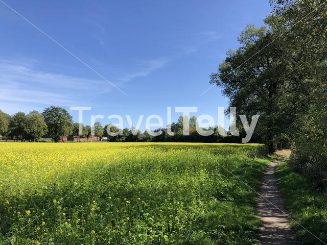 Path next to a field of yellow flowers around Stadtlohn in Germany