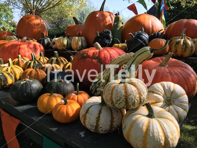 Pumpkins for sale at the countryside of The Netherlands