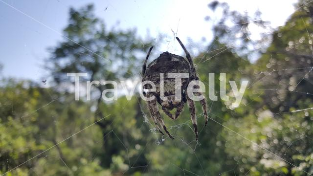 Big spider at iSimangaliso Wetland Park in South Africa