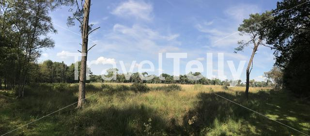 Forest panorama in Drenthe The Netherlands