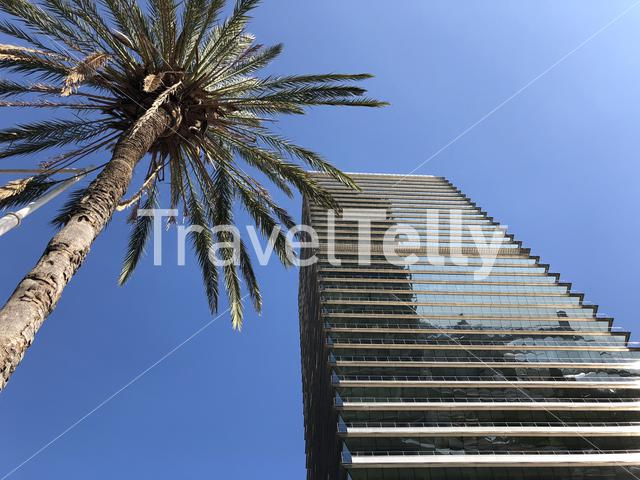 Palmtree next to a hotel in Barcelona Spain