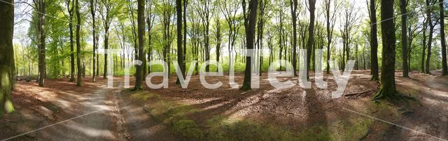 Edese Bos panorama in the province of Gelderland The Netherlands