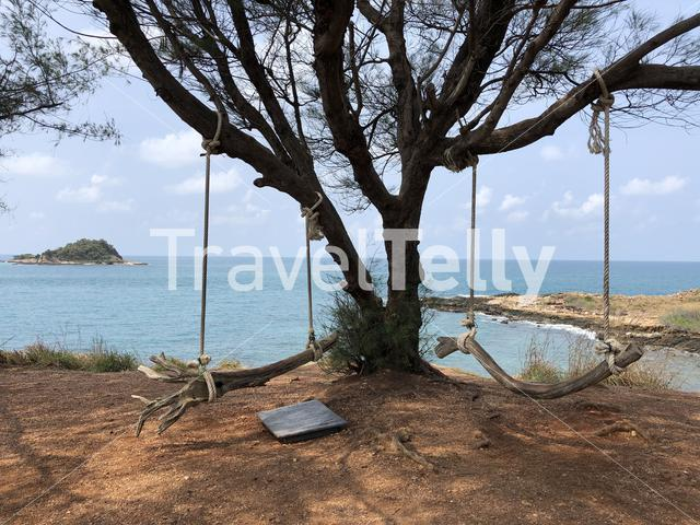 Tree branch swing on Koh Samed island in Thailand