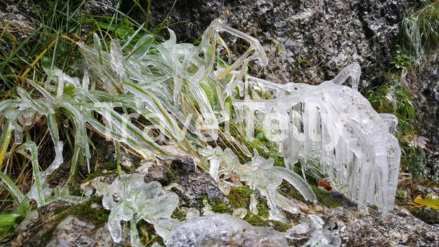 Frozen grass at the Bicaz Gorge in Romania