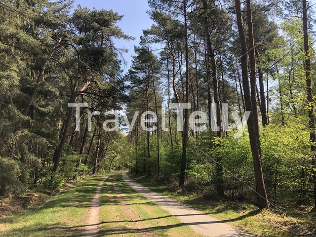 Path through the forest around Ommen in The Netherlands