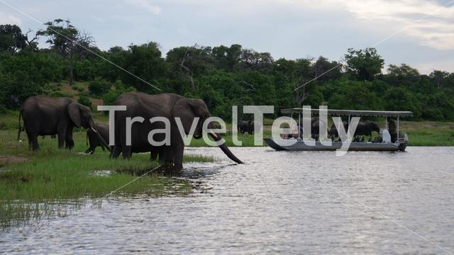 Tourists on a boat watching a herd of elephants next to the lake at Moremi Game Reserve, Botswana