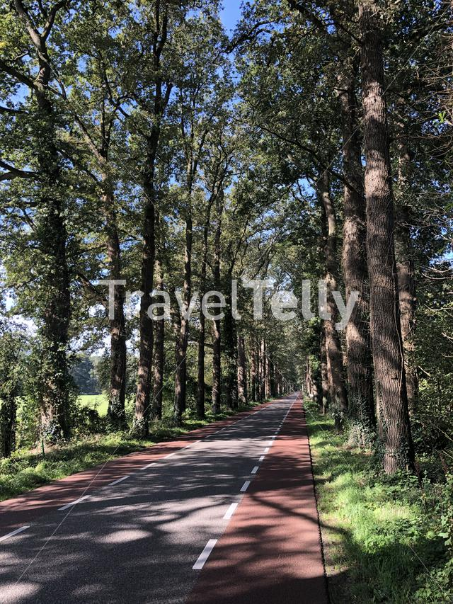 Road through the forest around Vorden, Gelderland The Netherlands