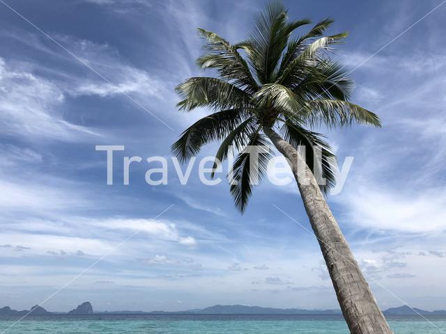 Palm tree on Koh Ngai in Thailand