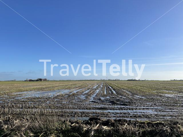 Wet farmland around Ferwoude in Friesland The Netherlands