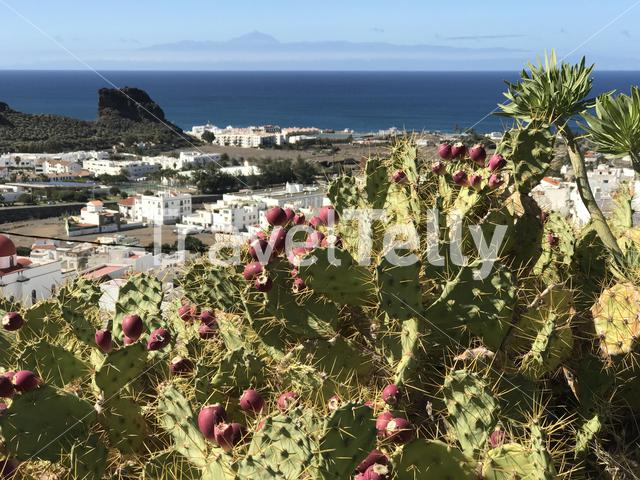 Aerial view over Agaete Gran Canaria Canary Islands Spain