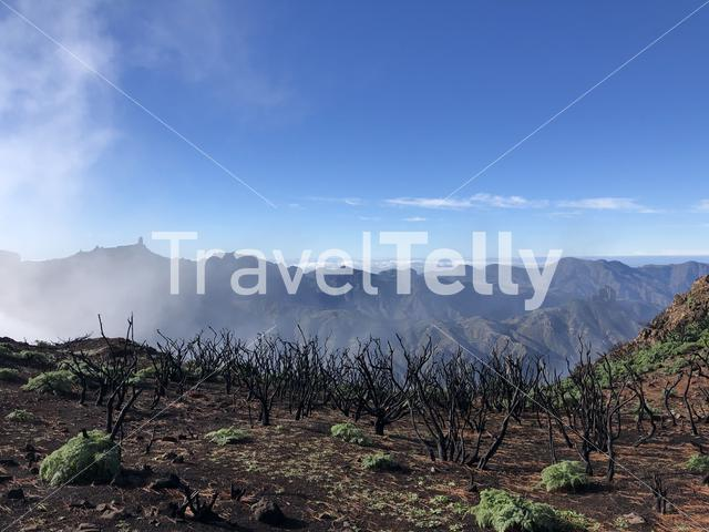 Mist from the valley with roque nublo on the background on Gran Canaria