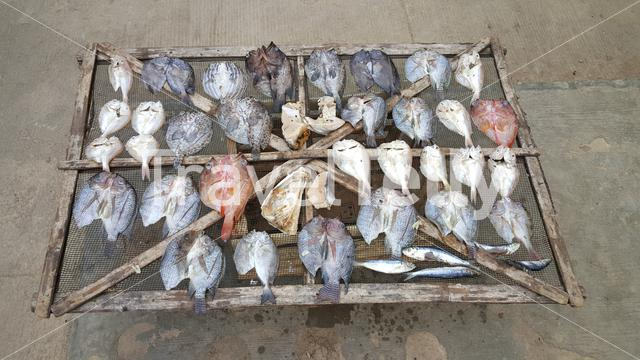 Fish drying on the streets of Palawan