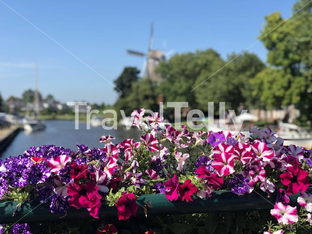 Flowers at a canal in Dokkum, Friesland The Netherlands