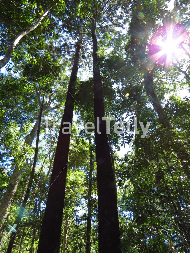 Forest in Noosa National Park in Australia