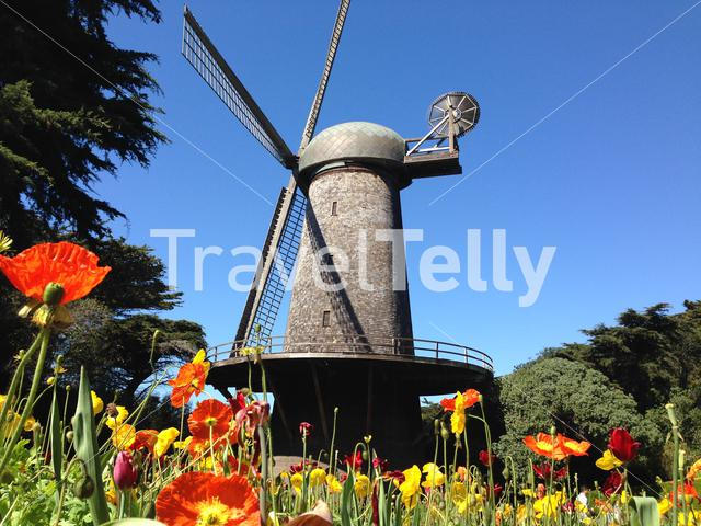 Dutch Windmill with Tulips at the western edge of Golden Gate Park in San Francisco