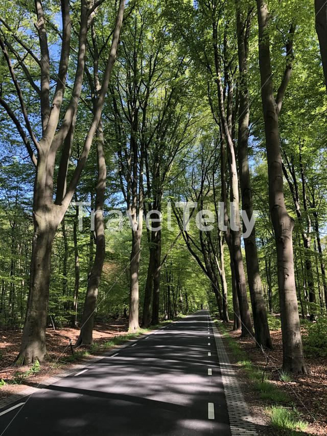Road around Vorden in Gelderland, The Netherlands