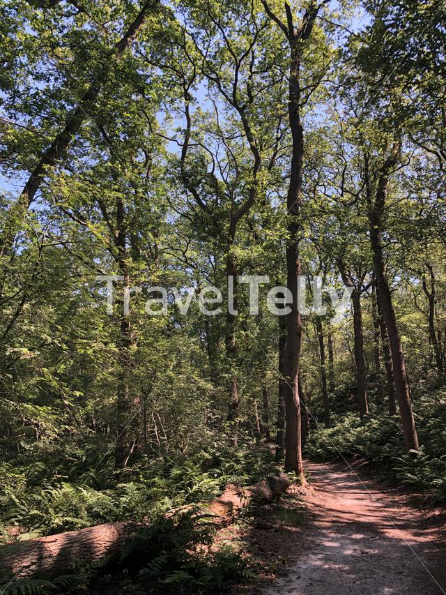 Trail through the forest around Beerze, Overijssel The Netherlands