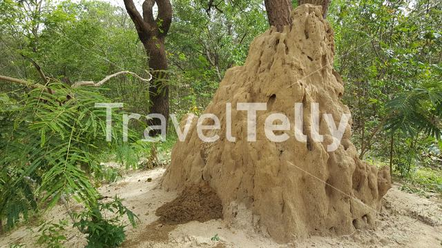 Termite hill at Bolon Mansarinko in Senegal