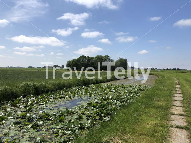 Farmland around Abbegea in Friesland The Netherlands