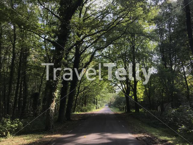 Road through the forest in Drenthe The Netherlands