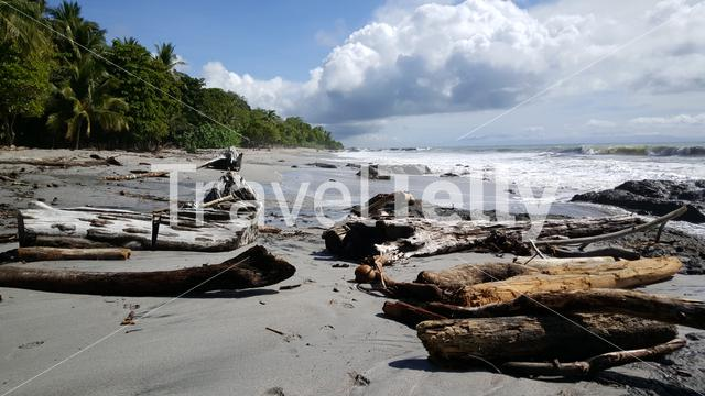 Big pieces of wood at the beach at Montezuma beach in Costa Rica