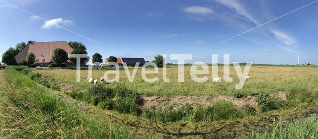 Panorama from sheeps on farmland in workum in Friesland, The Netherlands