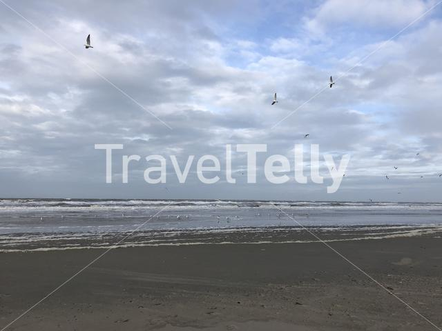 Sea gulls at Texel beach in The Netherlands