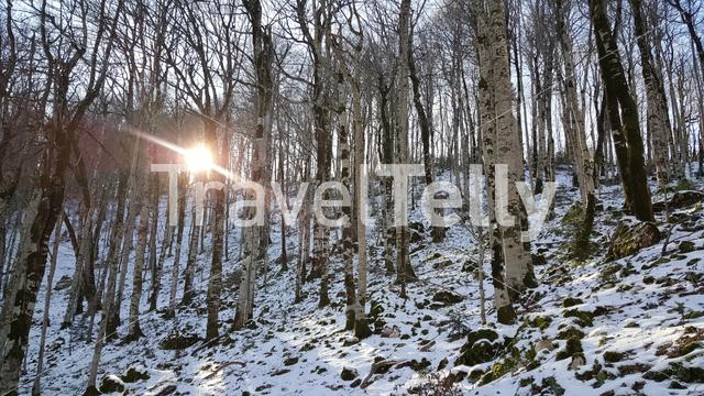 Sunshine through the trees in Biogradska Gora a forest and a national park in Montenegro