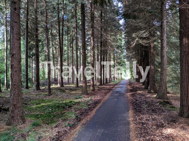 Path through the forest around Elp in Drenthe, The Netherlands