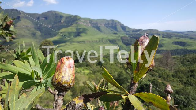 Scenery around Natal Drakensberg National Park in South Africa in South Africa