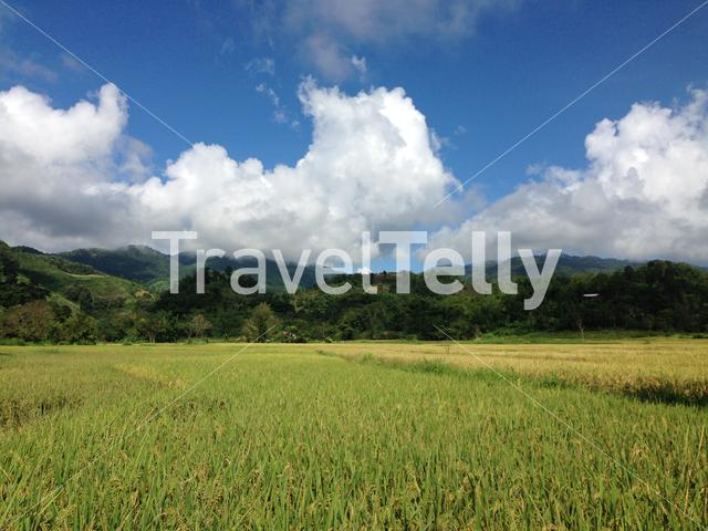 Rice field in the Northern Thailand